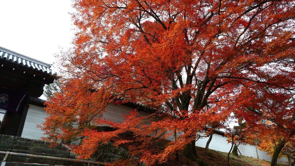 京都の紅葉~ 一乗寺界隈~