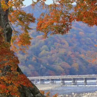 京都の紅葉~~歩いて回ろう 京都 嵐山の自然と庭園めぐり~