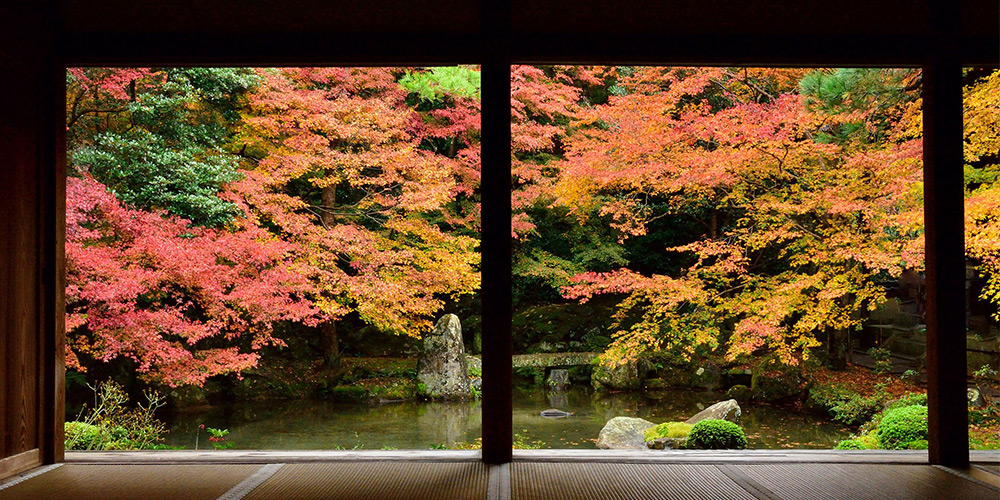 特集 京都の紅葉