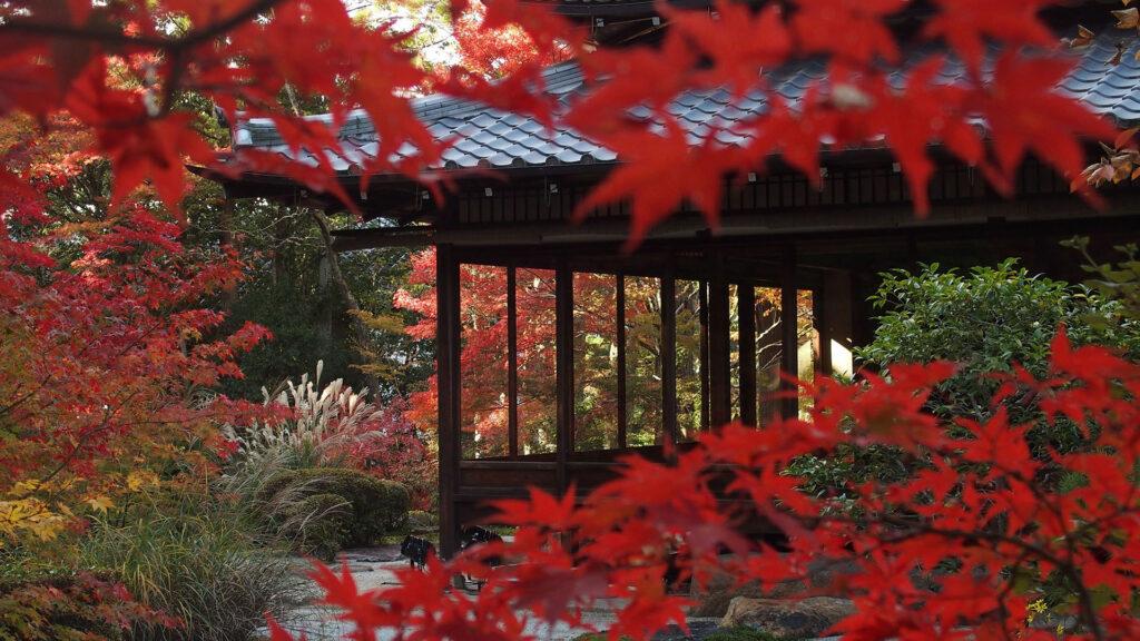 京都の紅葉~銀閣寺から南禅寺を巡る~