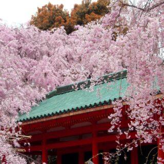 【KYOTOdesign】京都 | 岡崎界隈十石舟桜めぐりコース【フォトセレクション】