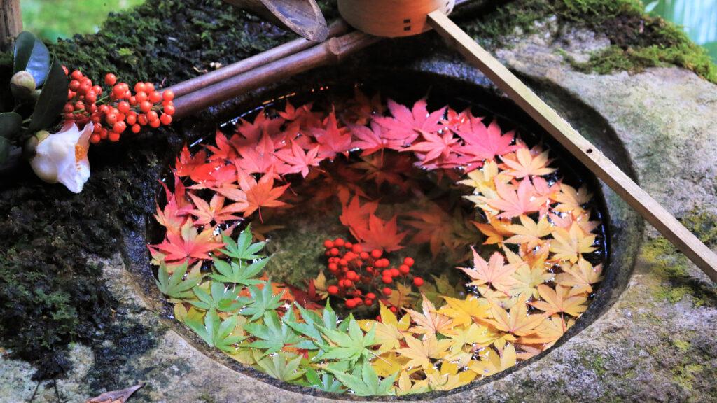 京都の紅葉~西エリア~